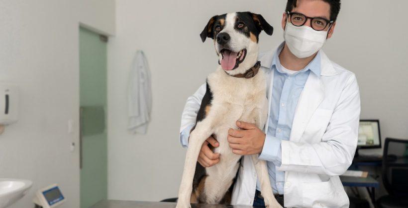 Na czym polega badanie neurologiczne psa lub kota?